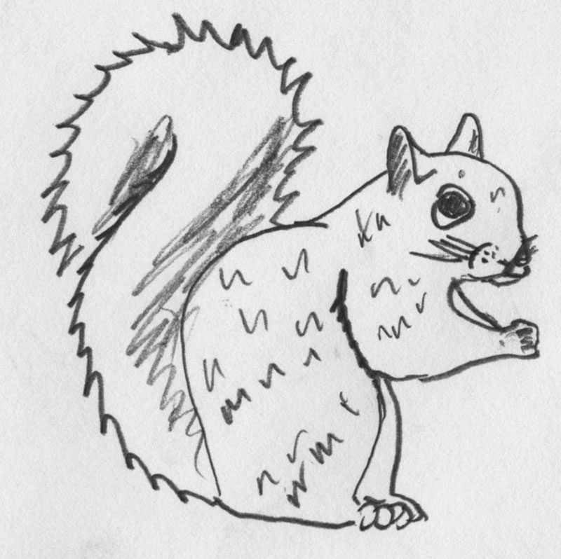 squirrel_drawn